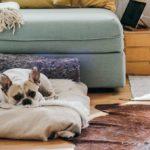 extra hypotheek voor verhuur